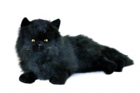 Weighted Black Plush Cat