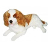 Weighted King Charles -white & brown